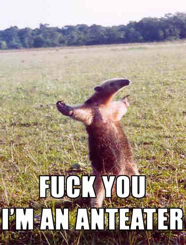 fuck_you_ant_eater_image_macro