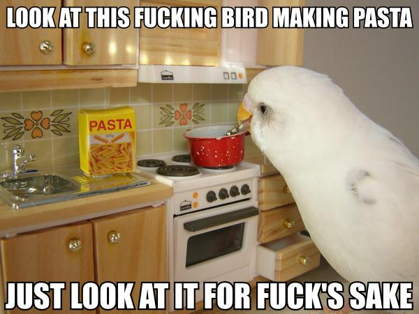 budgie in miniature kitchen