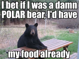 black_polar_bear_food_picnic_image_macro