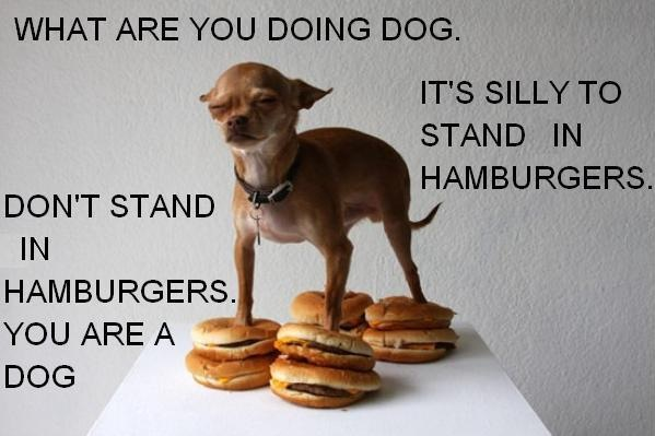dont stand in burgers you are a dog chihuahua meme silly