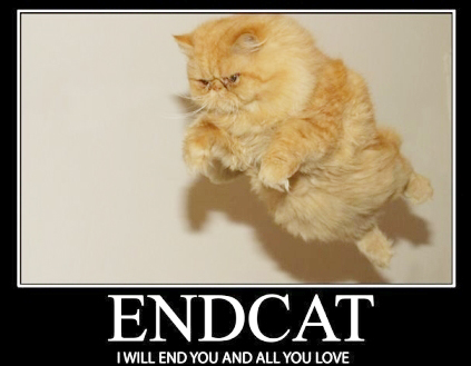 end cat all you love meme image macrp