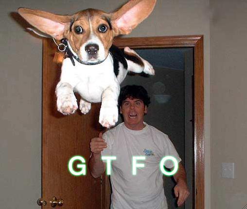 gtfo flying basset hound puppy image macro