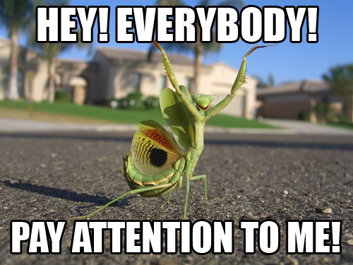 http://imagemacros.files.wordpress.com/2009/06/mantis.jpg