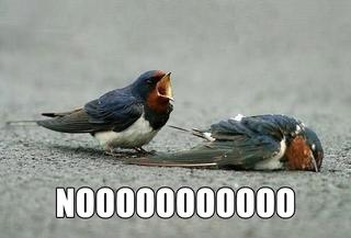 nooooo birds dead sad image macro