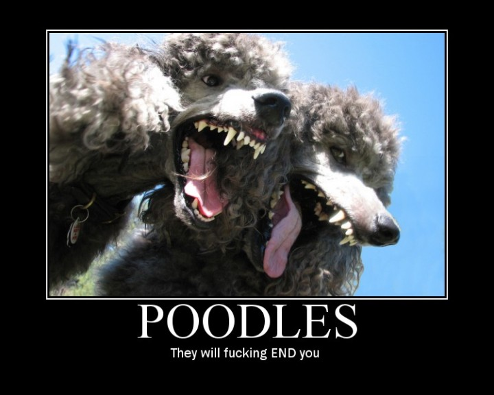 poodles they will end you dogs image macro endcat