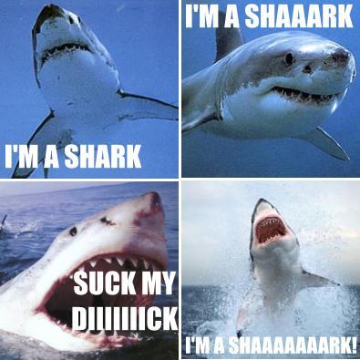 sharkmontage