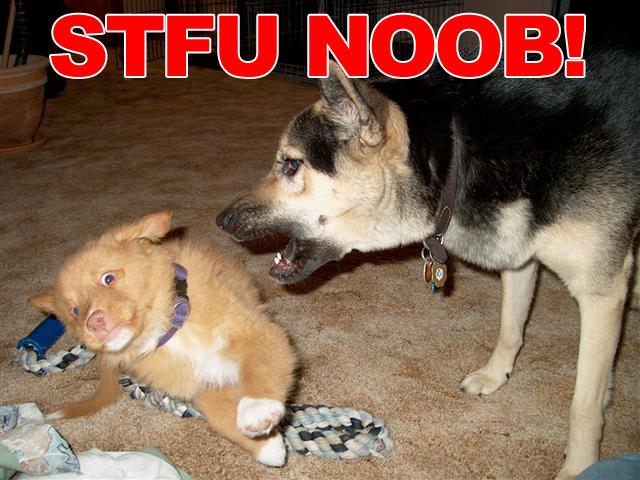 stfu n00b newfag dogs image macro