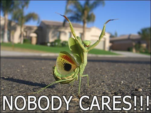praying mantis nobody cares meme image macro
