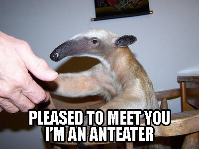 hi I'm an anteater shake hands hello baby image macro