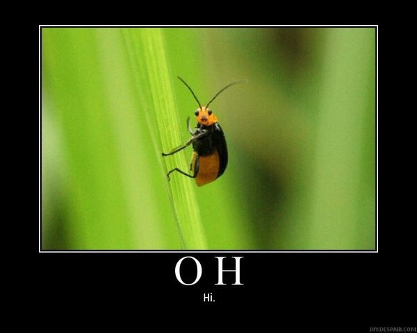 oh hi bug insect tiny green image macro