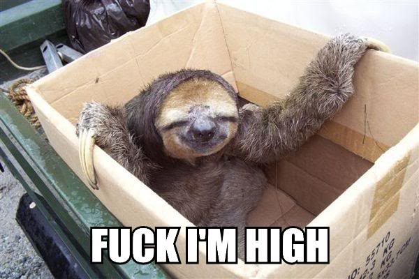 stoned high drugged drugs weed marijuana hash sloth image macro
