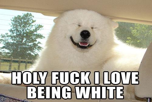 holy fuck love being white dog smiling image macro