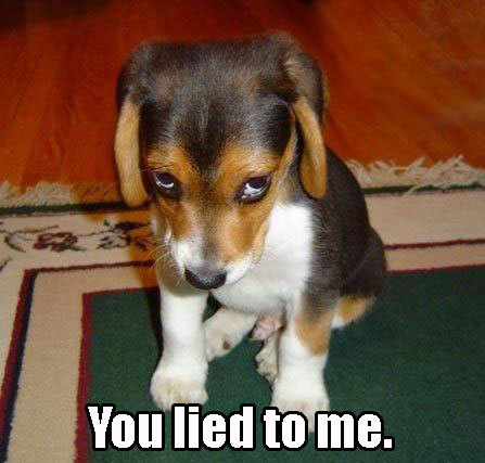 you lied to me puppy reproachful image macro