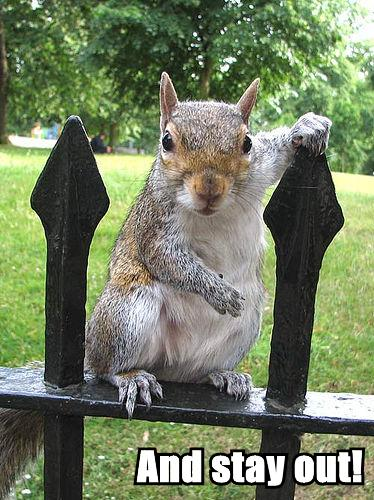 and stay out squirrel fence railings image macro