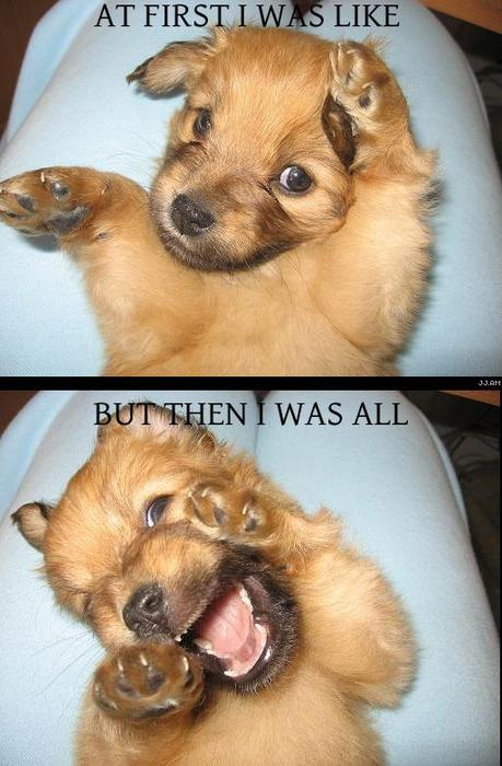 at first i was like meme cute puppy lold image macro