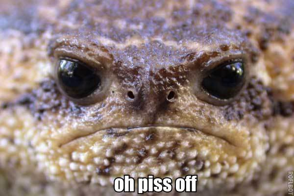 grumpy frog toad turtle piss off fuck off image macro