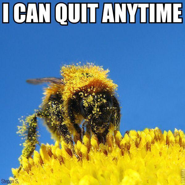 i can quit anytime bee nectar honey addiction image macro