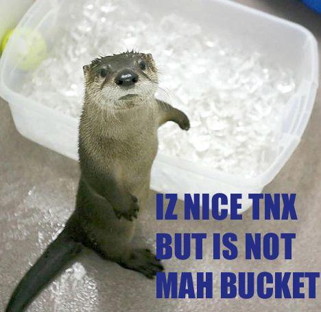 nice thanks bucket otter lolrus saga meme image macro