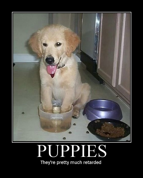 puppy puppies retarded dumb water bowl image macro