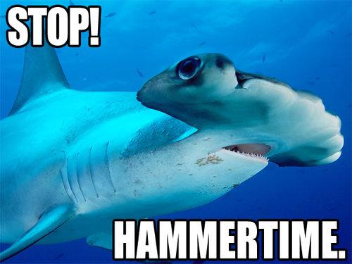 shark stop hammertime hammerhead image macro