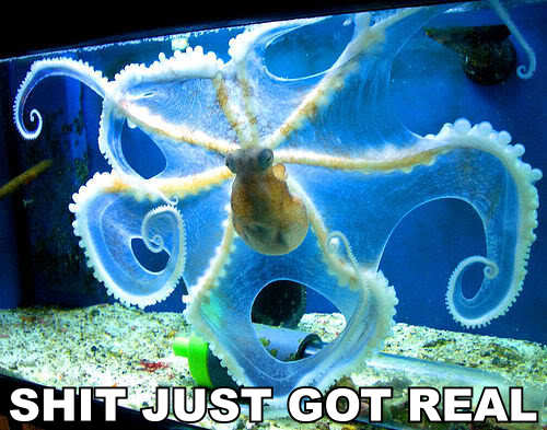 squid sea creature shit just got real meme image macro