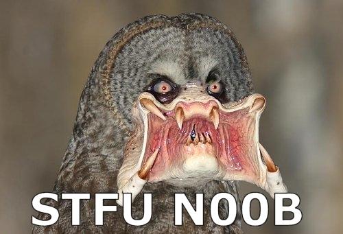 stfu n00b noob newfag owl predator image macro