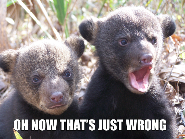 oh now thats just wrong not right two bears image macro