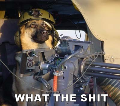 wtf shit dog soldier military gun image macro