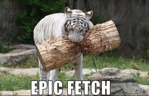 epic fetch white tiger log tree image macro