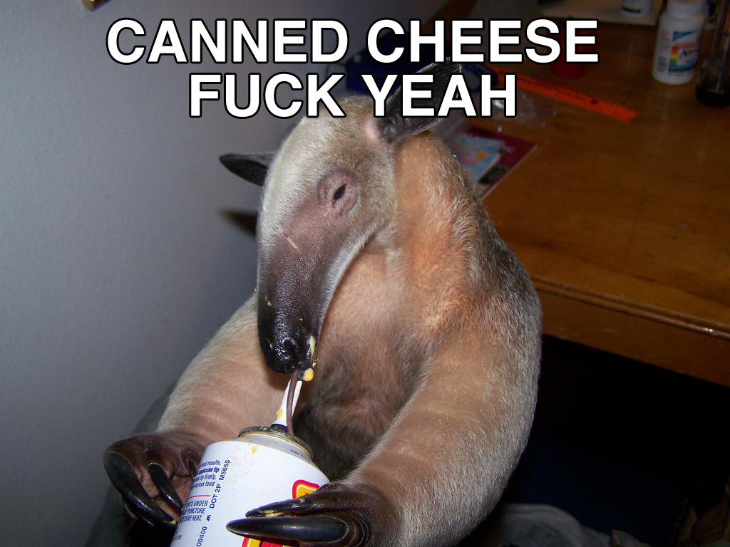 canned_cheese_anteater.jpg