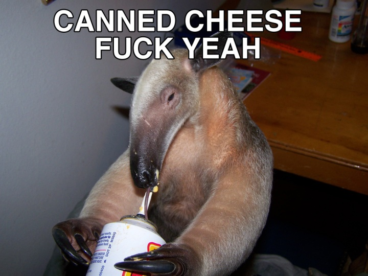 canned cheese cheez im an anteater fuck yeah image macro