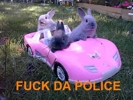 fuck the police rabbits bunnies in pink car image macro