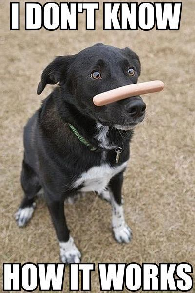 hot dog sausage on nose confused dog image macro
