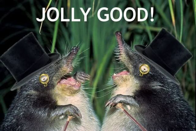 moles top hat monocle posh english upper class image macro