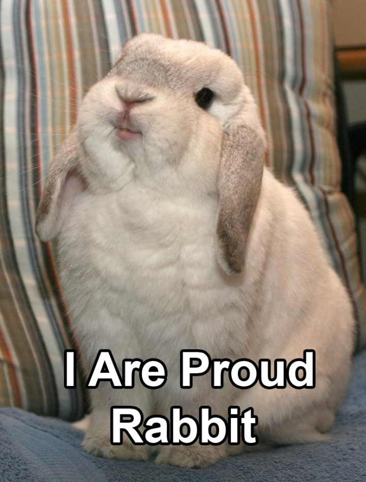 pleased proud rabbit bunny image macro