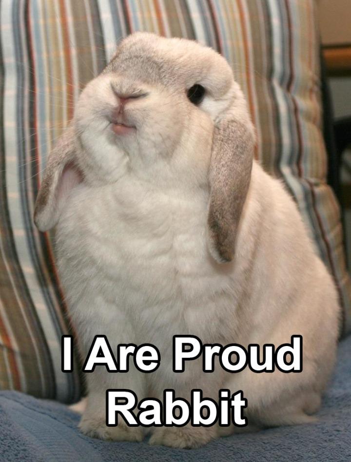pleased proud rabbit bunny image macro