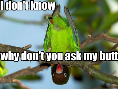 parrot bird upside down ask my butt idk image macro
