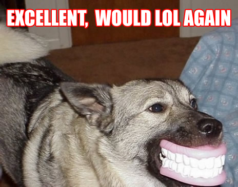 dog with false teeth smiling lol again image macro