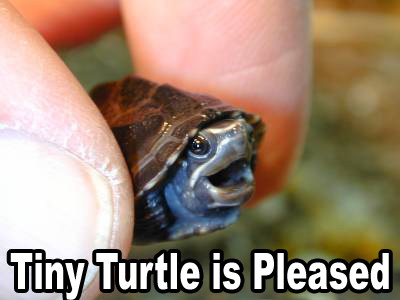 miniature tiny turtle tortoise pleased happy laughing lol image macro