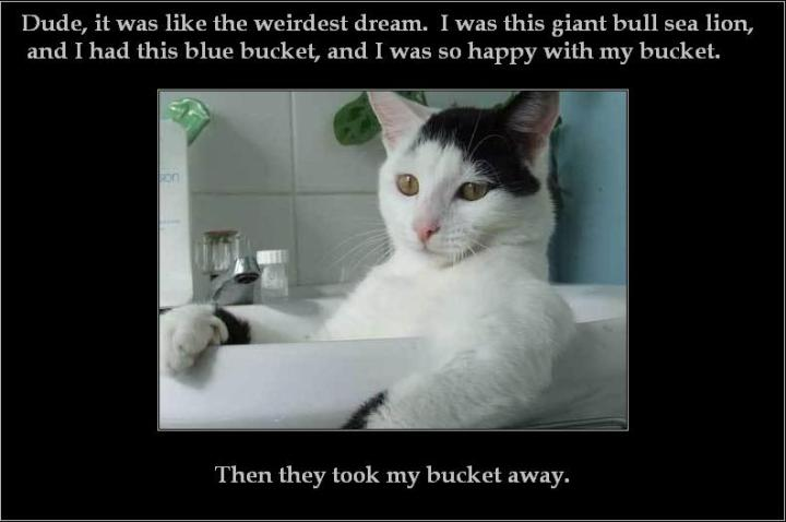 cat in basin dreaming of lolrus bucket meme poignant sad image macro