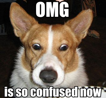confused corgi dog image macro
