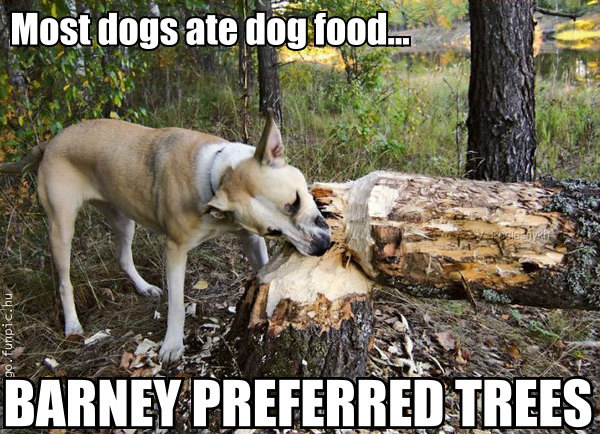 dog food dog chewing entire tree log maniac tetrabinary image macro
