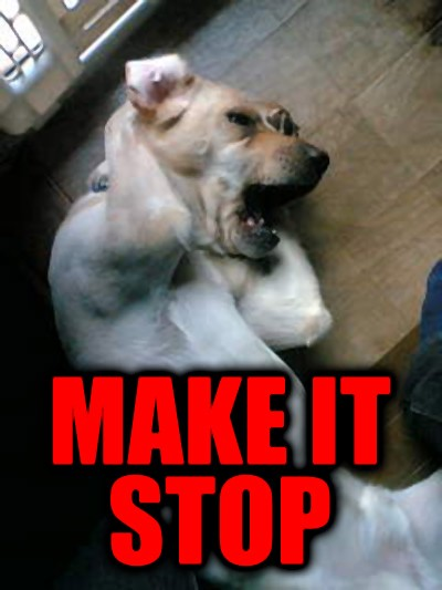make it stop dog cant stand loud noise covering ears image macro