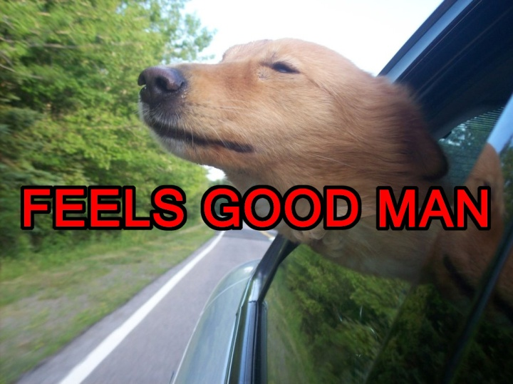 dog with head out car window wind happiness image macro