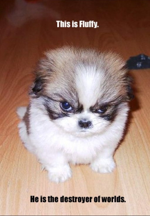 fluffy puppy dog hate evil eye bad image macro