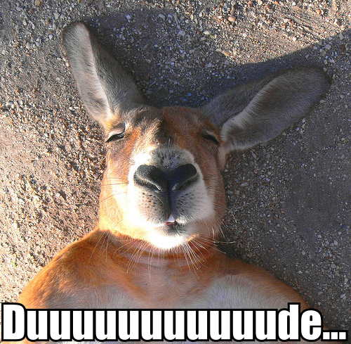 sleepy chilled stoned kangaroo image macro