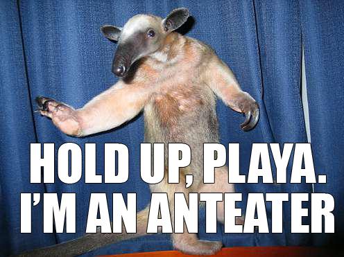im an anteater meme image macro
