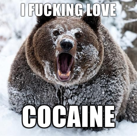 snowy brown bear love drugs coke image macro