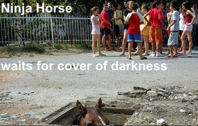 horse hiding in hole ground waiting japan ninja image macro