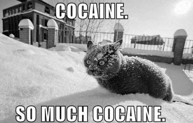 cocaine coke drugs snow winter cat image macro